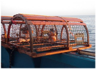 The American Lobster: History of Lobster Fishing & Processing